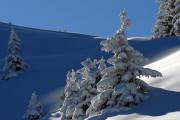 412412_bruson_snow_caked_trees