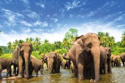 sri-lanka-elephants-1600x900-min